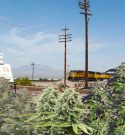 Marijuana Company Buys Entire California Town To Create Pot Paradise