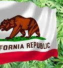 Pushing Forward: CA Senators Push for Federal Reclassification of Marijuana